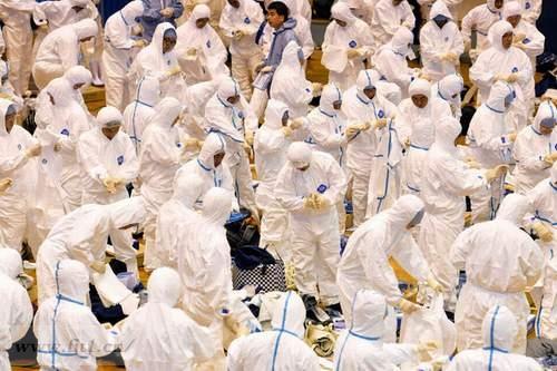 日本禽流感,扑杀11万只鸡