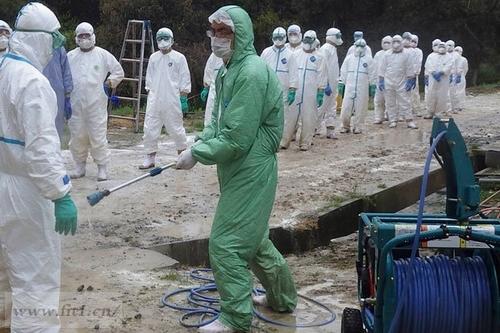 禽流感爆发,消毒
